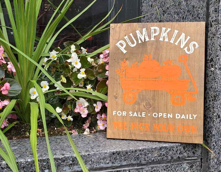Pumpkins For Sale 9×12